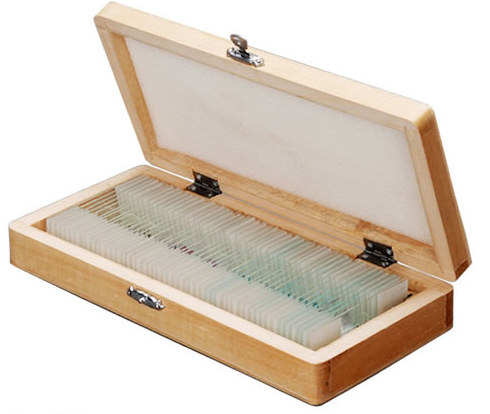 Zenith 50pc Microscope Prepared Slide Set